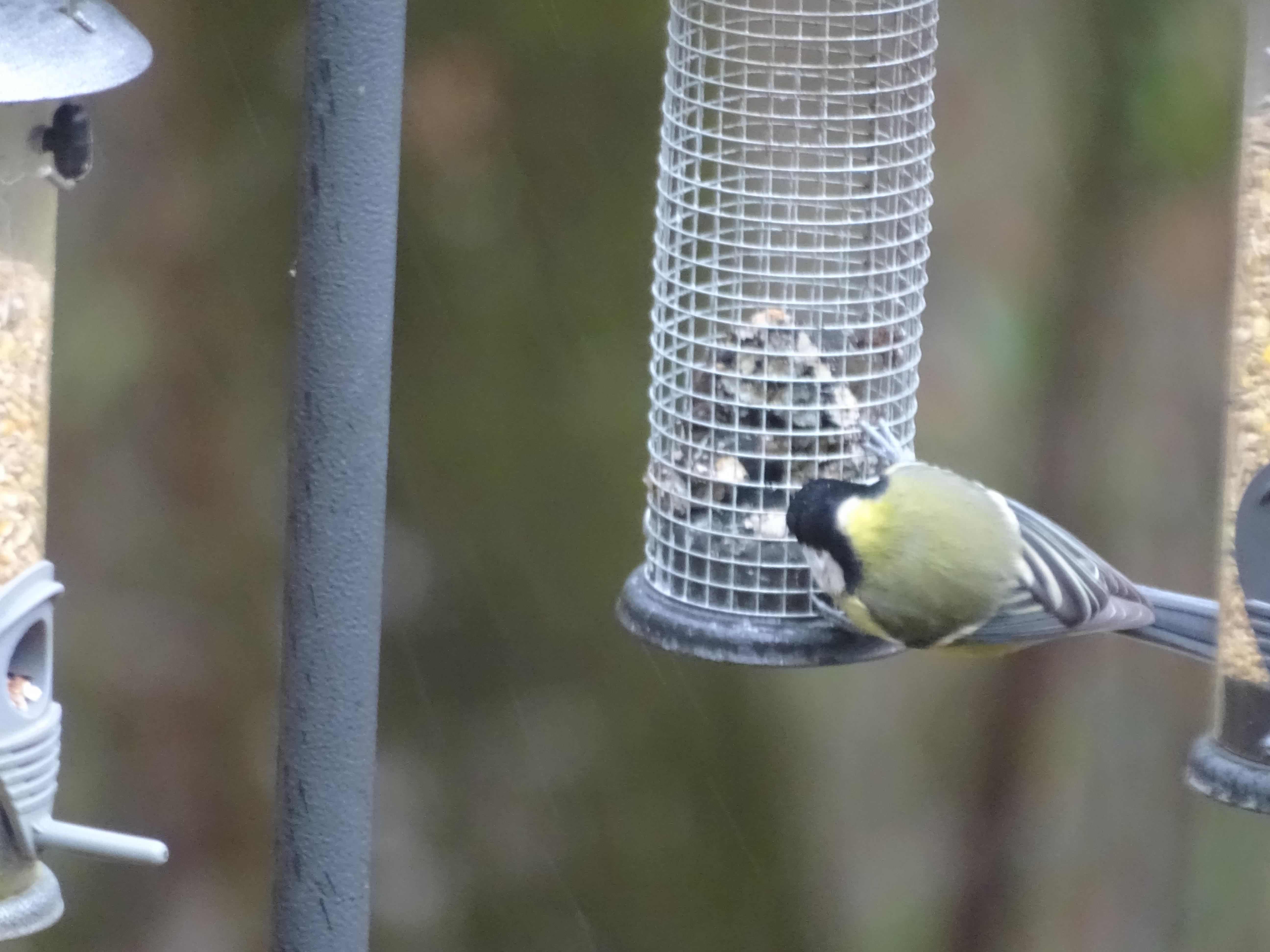 Bird feeding on a feeder