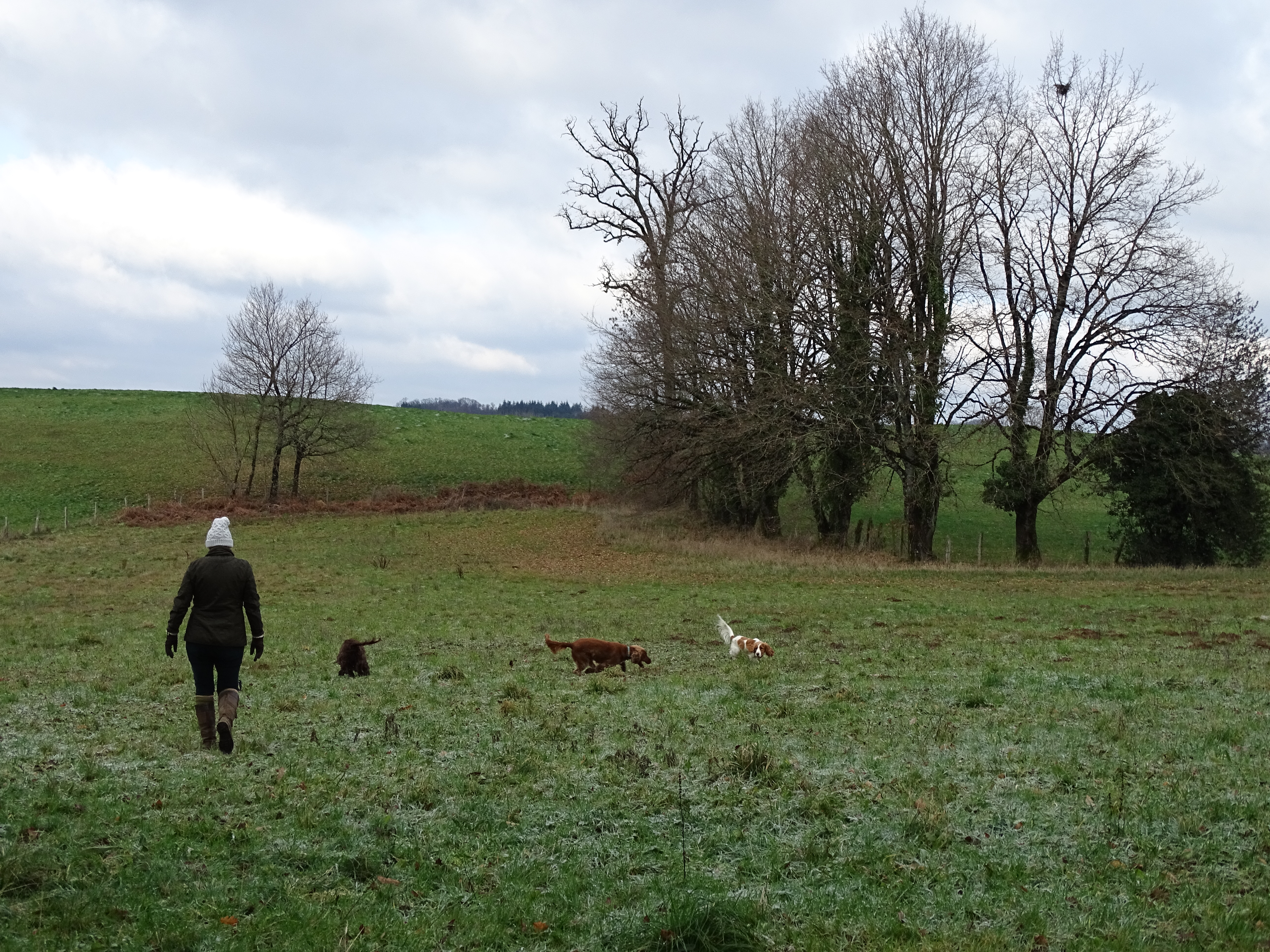 Dogs playing in the field
