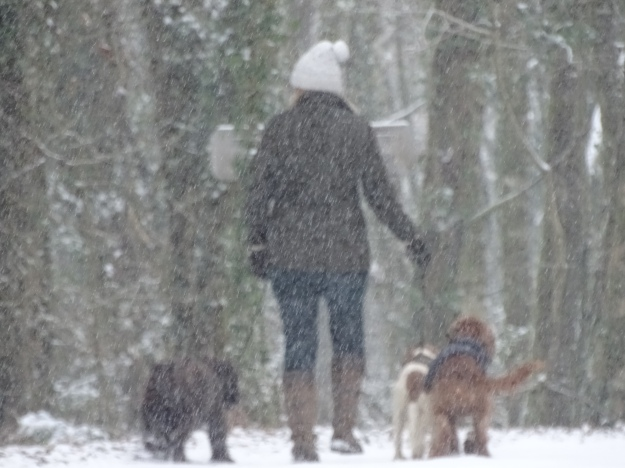 Woman walking her dogs in the snow