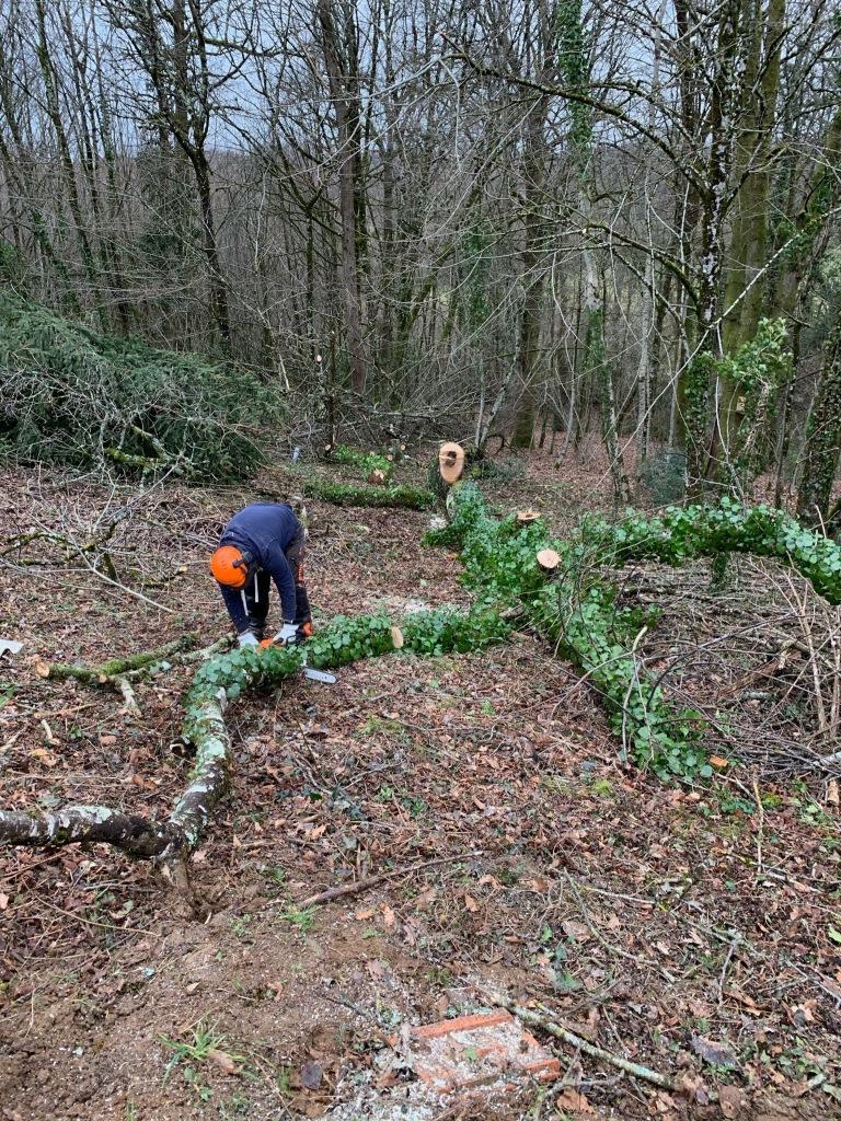 Man cutting a fallen tree