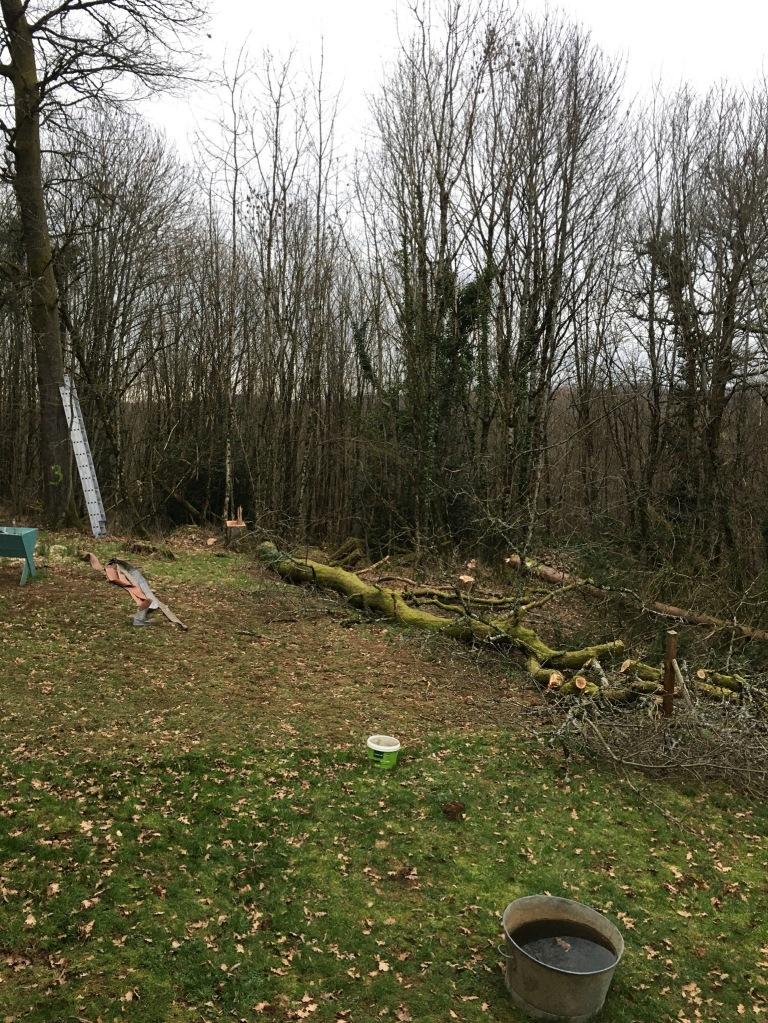 Tree fallen on the ground