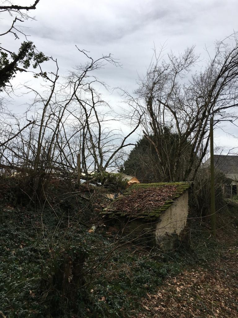 Fallen tree by the well